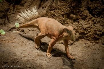 Prehistoric Stroll