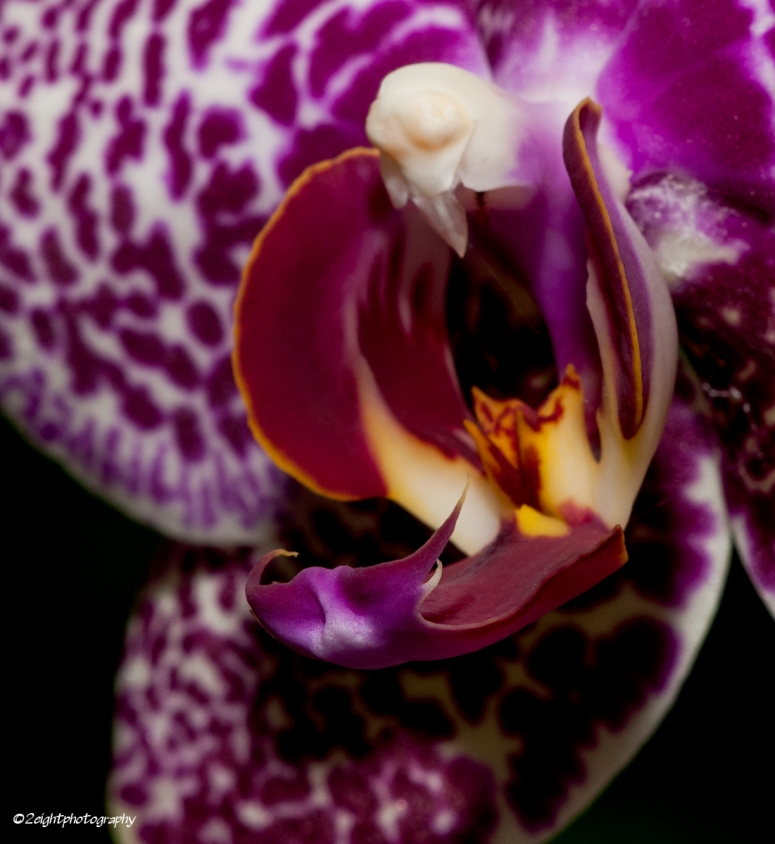 Orchid Night