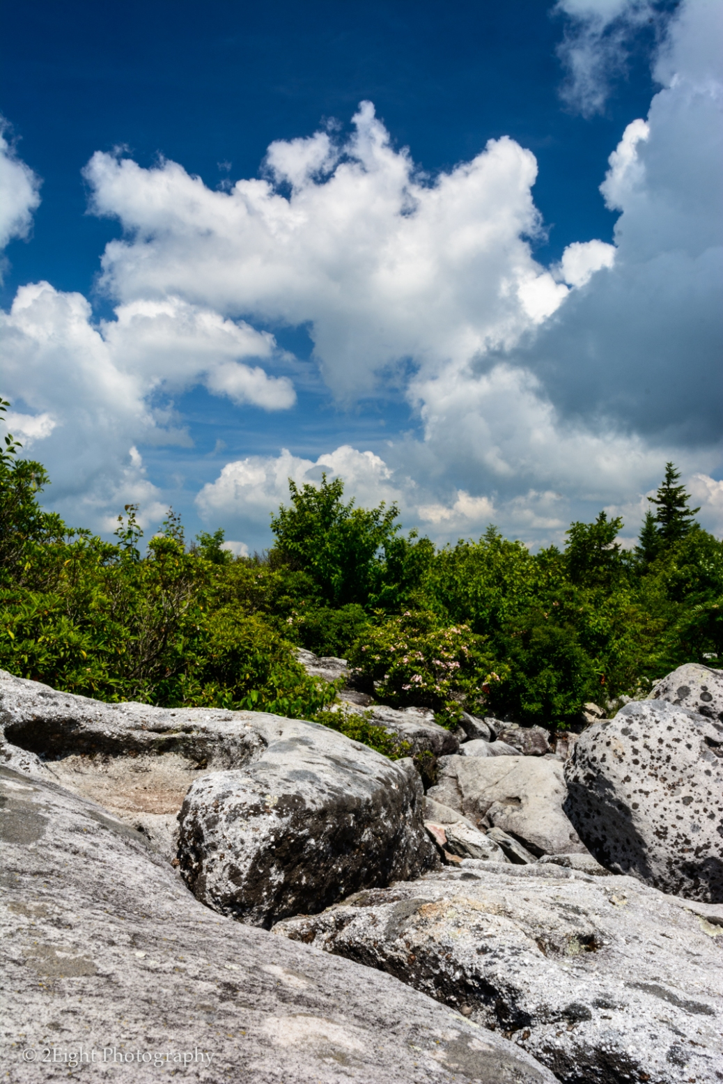 Dolly Sods Color
