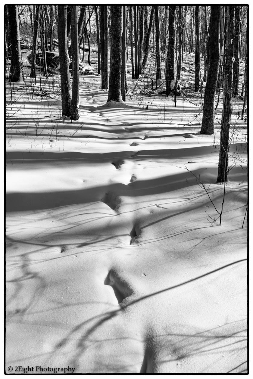 Hidden Footsteps