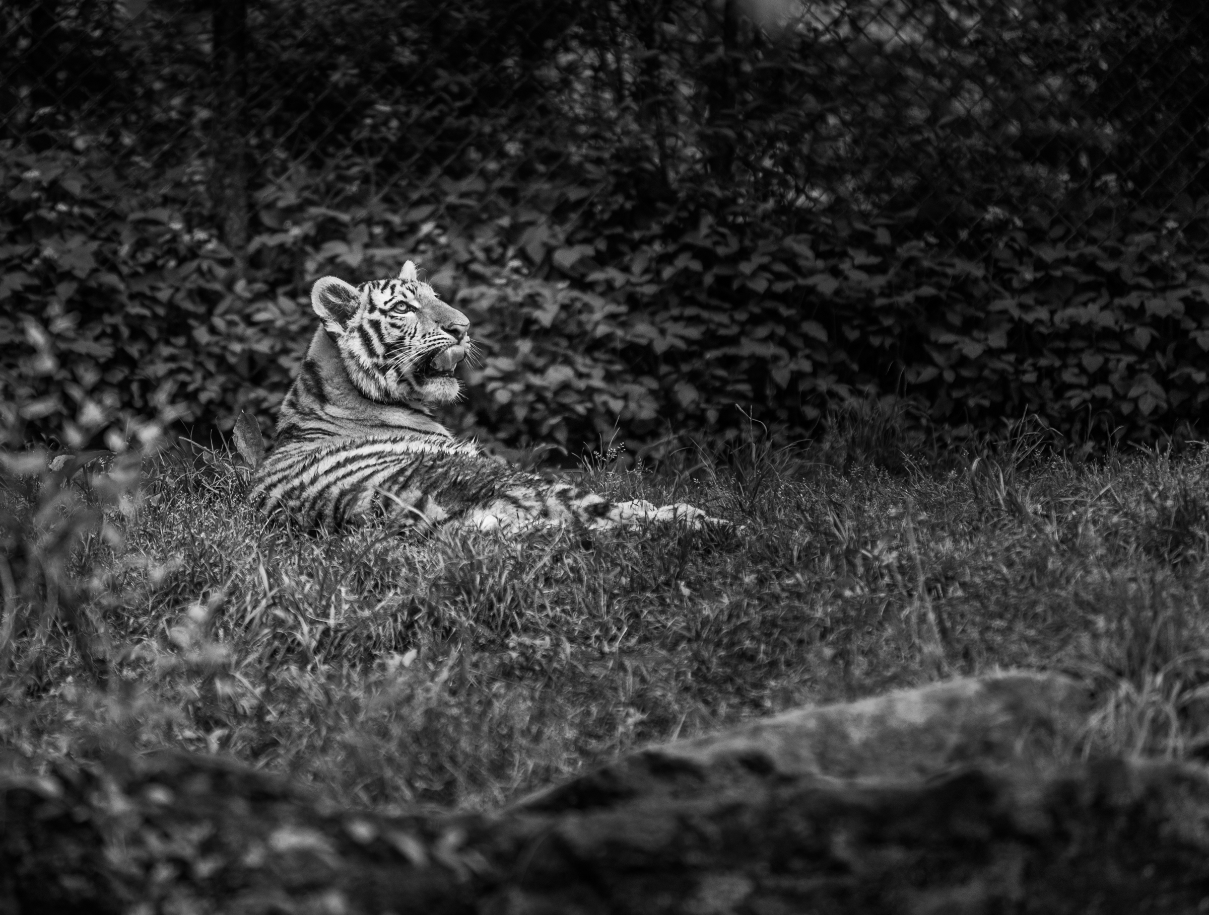 I hope you enjoy the pittsburgh zoo in black and white